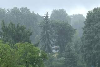 Wettererscheinung - Regen - Starkregen, Regen, regnen, Wasser, nass, Wetter, Niederschlag, Schauer