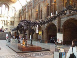 Dinosaurier: Skelett - Dino, Dinosaurier, Skelett, Knochen, Geschichte, Urtier, Evolution, ausgestorben, Saurier