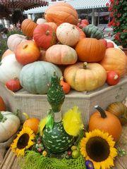 Kürbisse - Kürbis, Kürbisse, Markt, gelb, orange, rund, grün, Herbst, Gemüse, Lebensmittel