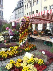 Gärtner-Markttage 1 - Blumen, Verkaufstand, Markt, Markstand, Herbst, Handel