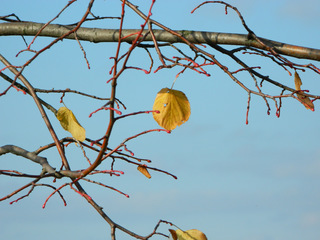 Herbstimpression - Herbst, Blatt, Baum, orange