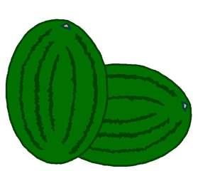 zwei Melonen - Melone, Melonen, Anlaut M, Wassermelone, Frucht, Anlaut M, Plural, Mehrzahl, zwei, grün