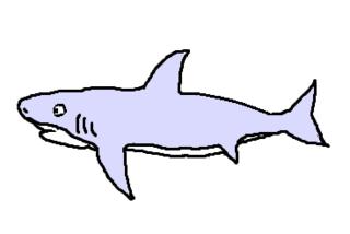 Hai - Hai, Haifisch, weißer Hai, shark, Fisch, Aquarium, Meer, Zeichnung, Clipart, Anlaut H, Wörter mit ai