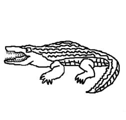 Krokodil - Krokodil, crocodile, Alligator, Kaiman, Reptil, Afrika, Amazonas, Zeichnung, Clipart