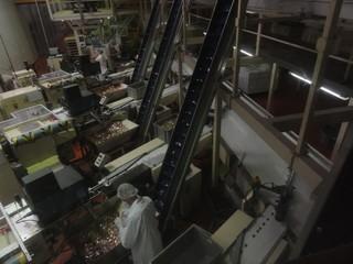 Schokoladenfabrik2 - Schokolade, Genussmittel, Milchprodukt, Kakaoerzeugnis, Milch, Kakao, Schokoladenfabrik, Schweiz, Waage, Lebensmittelkontrolle, Kontrolle, Stichprobe, Fließband, Hygiene, Haarschutz, wiegen, Verpackung, Förderband