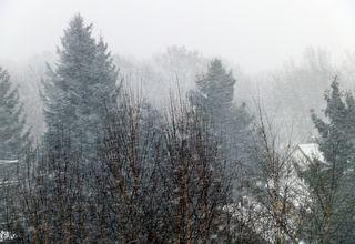 Wettererscheinung Schnee - Wetter, Schnee, schneit, schneien, Niederschlag, kalt, Winter, winterlich, windig, Schneefall