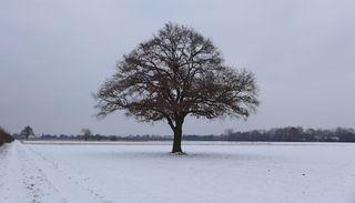 Winterimpressionen #02 - Eiche, Baum, kahle Bäume, kahl, unbelaubt, Winter, Winterlandschaft, Landschaft, Schneelandschaft, Schnee, Schneedecke, verschneit, Kälte, Einsamkeit, Ruhe, Stille, Schreibanlass, Meditation