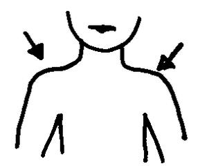 Schultern - Schultern, Körper, Körperteile, body, body parts, shoulders, Körperregion, Schultergelenk