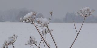 Pflanze unter Eis # 02 - Eis, Tauwetter, Winter, gefrorenes Wasser, Tropfen, Aggregatzustand