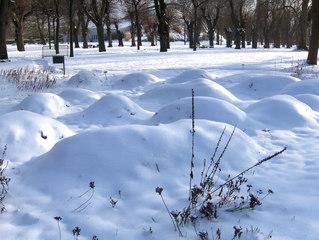 Frostschutz bei Pflanzen #2 - Pflanzen, Winter, Schutz, Frost, Frostschutz, Kälte, Laub, Tanne, Zweige, schützen, kalt, erfrieren, Schnee, Eis, abdecken, Abdeckung