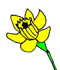Narzisse - Narzisse, Osterglocke, gelb, Frühling, Ostern, Blume