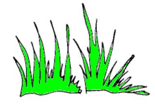 Gras - Gras, grün, Natur, Wiese, Garten