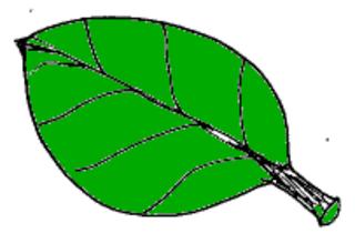 Blatt - Blatt, grün, Natur, Baum, Herbst