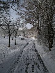 Verschneiter Waldweg #3 - Wald, Waldweg, Weg, Pfad, Winter, Schnee, verschneit, unbelaubt, romantisch, einsam, Laubbäume