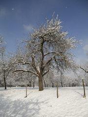 Verschneiter Baum #2 - Baum, kahle Bäume, kahl, unbelaubt, Winter, Landschaft, Winterlandschaft, Schneelandschaft, Schnee, Schneedecke, verschneit, Kälte, Einsamkeit, Ruhe, Stille, Schreibanlass, Meditation