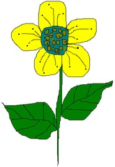 Blume 4 - Blume, Garten, Pflanze, Blüte, Blätter, Farbe, Sommer, Violett, Lila Gelb