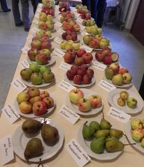 Äpfel - Äpfel, Apfel, Gesundheit, Ernährung, Obst, Früchte, Garten, Kernobst, Vitamine