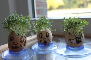 Ostereier-Kresseköpfe - Osterei, Ostereier, Eierschale, Eierschalen, bepflanzt, bemalt, Gesicht, Kresse, Kopf, Kresseköpfe