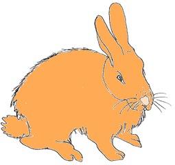 Hase - Osterhase, Hase, Kaninchen, Ostern