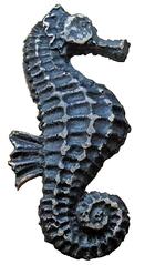 Blaues Seepferdchen 1 - Seepferdchen, blau, Muschel, Tier, Wasser, Meeresbewohner, Meer