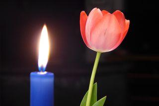 Tulpe und Kerze - Tulpe, Kerze, Meditation, Stimmung, Schreibanlass, Licht