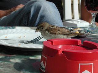 Sperling - Sperling, Spatz, Singvögel, Vogel, zutraulich, neugierig, hungrig, kurios, Schreibanlass, witzig