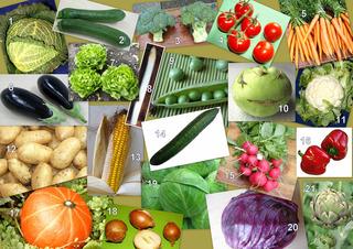 Collage: Gemüse - Gemüse, essen, Mahlzeit, Pflanzen, Garten, Collage, Wirsing, Kohl, Zucchini, Broccoli, Tomaten, Möhren, Mohrrüben, gelbe Rüben, Auberginen, Salat, Kopfsalat, Spargel, Erbsen, Kohlrabi, Blumenkohl, Kartoffeln, Mais, Gurke, Salatgurke, Radieschen, Paprika, Kürbis, Zwiebeln, Weißkohl, Rotkohl, Artischocken, rot, gelb, grün, DaF