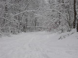 Schneelandschaft - Schnee, schneebedeckt, Winter, Winterwald, Besinnung