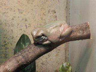 Frosch - Frosch, Kröte, Natur, Tier