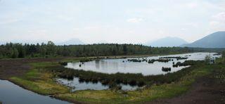 Rosenheim - Kolbermoor - renaturiertes Moorgebiet # 1 - Moor, Torf, Renaturierung, Umweltschutz, Artenschutz