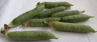 Erbsen in der Schote #1 - Erbsen, Schote, Schoten, Gartenerbse, Speiseerbse, Hülsenfrucht, Hülse, Nutzpflanze, Gartenpflanze