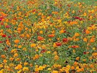 Sommerbeet in orange#2 - Sommer, Blume, Blumen, orange, Sommerblumen, Kunst, Farbenlehre, Gartenanlage, Beet, Blumenbeet