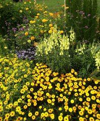 Blumenbeet in orange und gelb#2 - Sommer, Blume, Blumen, orange, Sommerblumen, Kunst, Farbenlehre, Gartenanlage, Beet, Blumenbeet