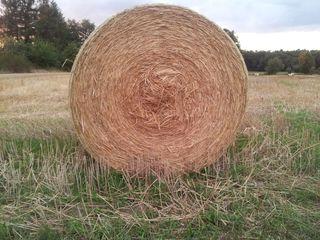 Strohballen - Getreide, Feld, Ernte, Erntedank, Stroh, Strohballen, Rundballen, gelb, gold, ernten, mähen, Spätsommer, rund, rollen, Zylinder, Mathematik, Volumen, Oberfläche, Erntezeit