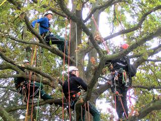 Baumpflege #1 - Baumpflege, Baum, Bäume, pflegen, Pflege, sägen, schneiden, klettern Seil, Seile, Klettertechnik, Beruf, Ausbildung