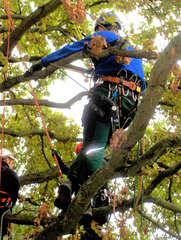 Baumpflege #2 - Baumpflege, Baum, Bäume, pflegen, Pflege, sägen, schneiden, klettern Seil, Seile, Klettertechnik, Beruf, Ausbildung