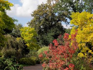 Es grünt so grün.. - grün, mischen, Mischtöne, Grüntöne, hellgrün, dunkelgrün, Herbsttöne, Herbstfarben, Farben, Mischfarben, gelb, Herbst