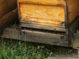 Bienenkästen#2 - Bienen, Schwarm, Natur, Imkerei, Bienenvolk, Bienenschwarm, Bienenkasten, anlocken