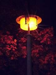 leuchtende Straßenlaterne - Dunkelheit, Impulsbild, Fantasie, Märchen, Gruselgeschichte, Licht, Straßenlaterne, Strom, Elektrizität, Schreibanlass, leuchten, Grusel, gruseln, Fantasiereise, Erwartung, dunkel, hell, Meditation, Symbol, symbolisch, Baum, Blatt, Blattwerk, Äste, Blick, Mystik, mystisch, ängstlich, Angst, gruselig, Traum, Nacht, gespenstisch, Erzählanlass, Schreibanlass, finster, unheimlich, düster, Lichtstrahl, Optik