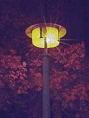 Straßenlaterne graviert - Dunkelheit, Impulsbild, Fantasie, Märchen, Gruselgeschichte, Licht, Straßenlaterne, Strom, Elektrizität, Schreibanlass, leuchten, Grusel, gruseln, Fantasiereise, Erwartung, dunkel, hell, Meditation, Symbol, symbolisch, Baum, Blatt, Blattwerk, Äste, Blick, Mystik, mystisch, ängstlich, Angst, gruselig, Traum, Nacht, gespenstisch, Erzählanlass, Schreibanlass, finster, unheimlich, düster, Lichtstrahl, Optik