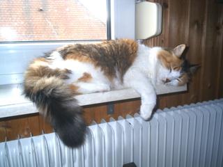 schlafende Katze auf der Fensterbank - Unterricht, Haustiere, Katze, schlafen, Gewohnheiten, Schreibanlass, faul
