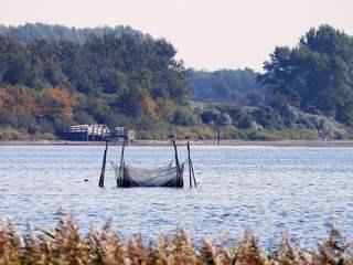 Reuse im Wasser - Reuse, Fischfang, fangen, Wasser, Netz, Netzgeflecht, fischen, Fischfanggerät, Fischerei