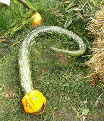 Kürbisdekoration #7 - Kürbis, Herbst, Dekoration, bunt