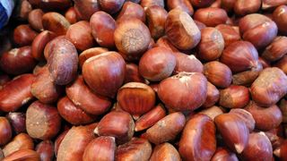 Maronen - Edelkastanie, Esskastanie, Maroni, Marone, Frucht, Kastanie, essen, Nahrung, Herbst