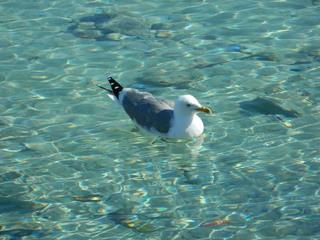 Möwe schwimmend - Möwe, Vogel, Wasser, schwimmen, Meer