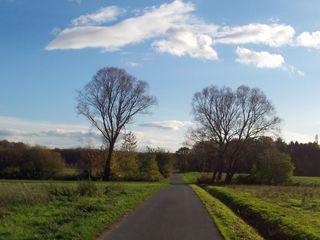Herbsthimmel - Herbst, Baum, kahl, Wolken, Weg, Bäume, Schreibanlass