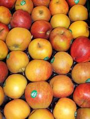Äpfel Boskop - Apfel, Äpfel, Boskop, Frucht, Obst, Winterapfel, Kulturapfel, Renette