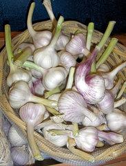 Knoblauch - Knoblauch, Pflanze, Gewürz, Heilpflanze, Lauch, Zwiebel, Zehe, Zehen, frisch