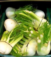 Fenchel - Fenchel, Fenchelknolle, Fenchelknollen, Gemüse, Heilpflanze, Knolle, grün, weiß