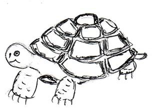 Schildkröte - Natur, Tier, Reptilien, Schildkröte, Anlaut Sch, Kiefermäuler, Wirbeltier, Landwirbeltier, Panzer, Haustier, Landschildkröte, Reptil, Schuppen, Winterruhe, langsam, Keratin, bedroht, Schildpatt, Artenschutz, Washingtoner Abkommen
